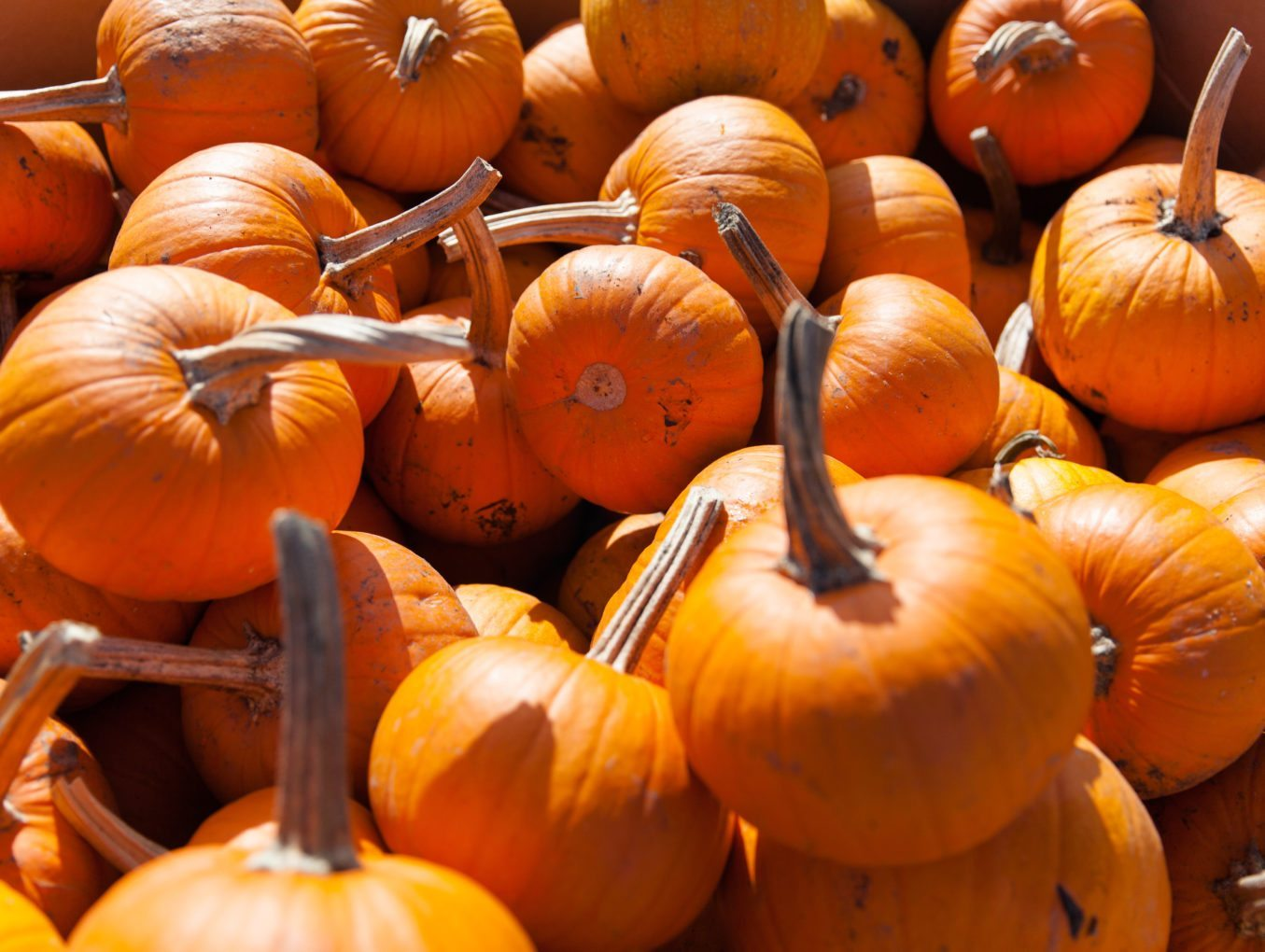 5 Fall Gems in the Willamette Valley